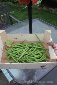 GardenBean5